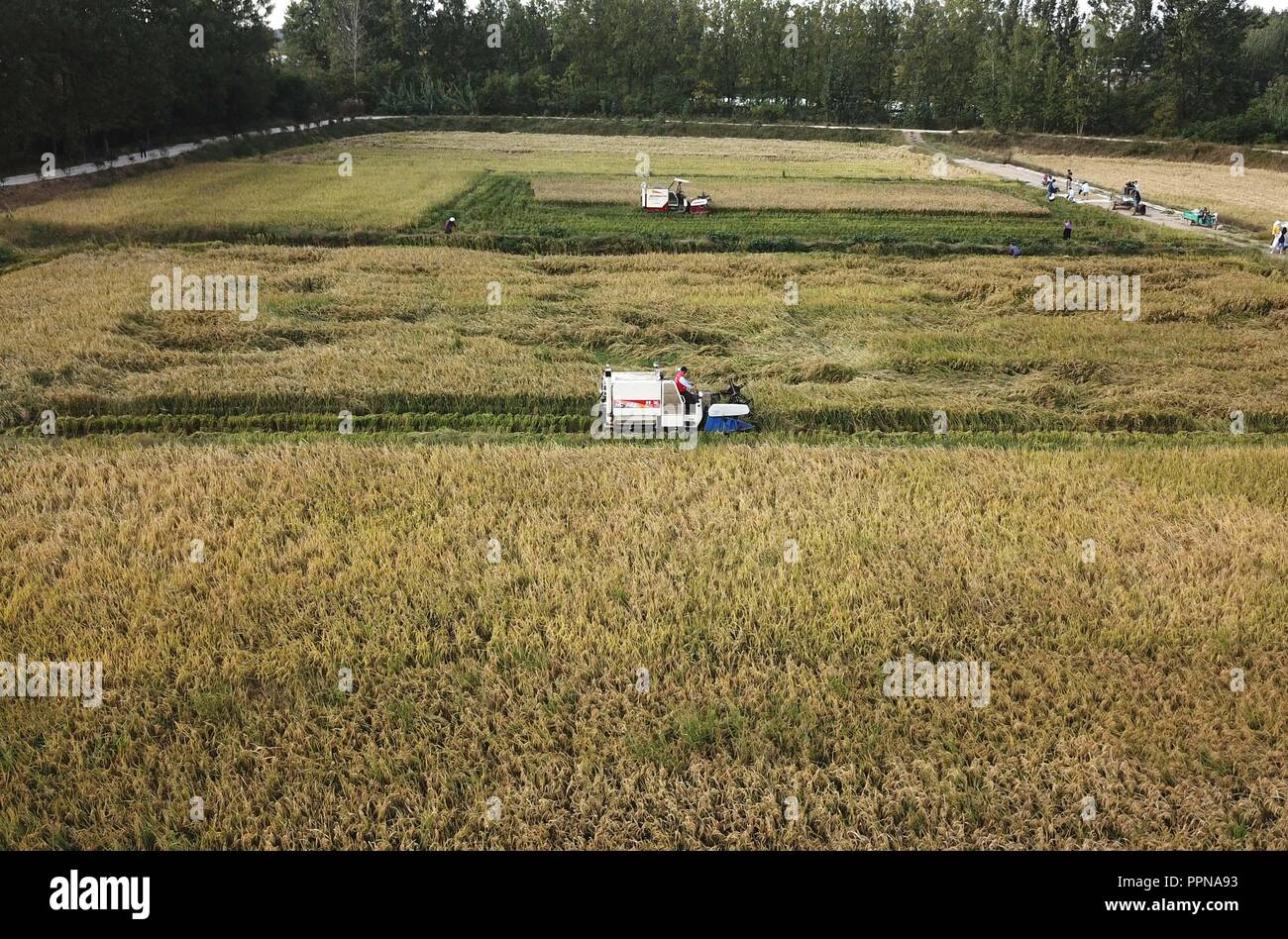 Fengyang, China's Anhui Province. 27th Sep, 2018. Farmers operate reapers to harvest rice at Xiaogang Village in Fengyang County, east China's Anhui Province, Sept. 27, 2018. Credit: Liu Junxi/Xinhua/Alamy Live News - Stock Image