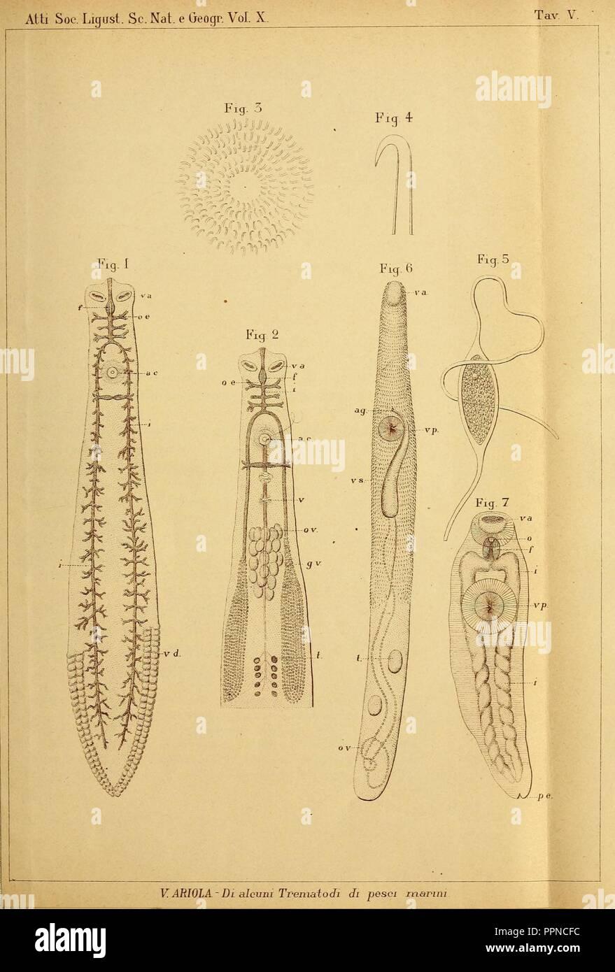 Bollettino dei Musei di Zoologia e Anatomia Comparata della R. Università di Genova Stock Photo
