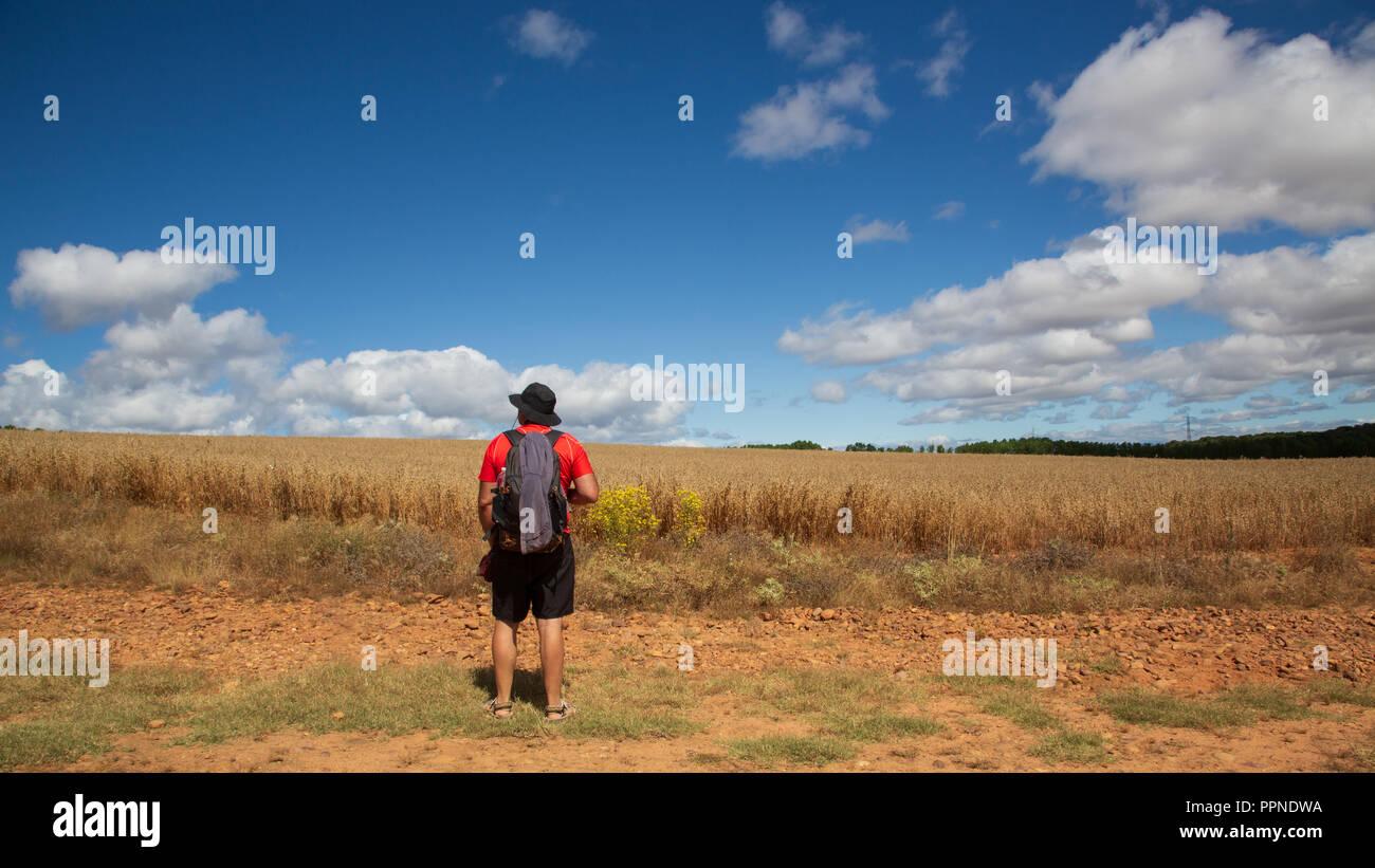 Camino de Santiago (Spain) - A pilgrim walking along the way of St.James, in the spanish meseta - Stock Image