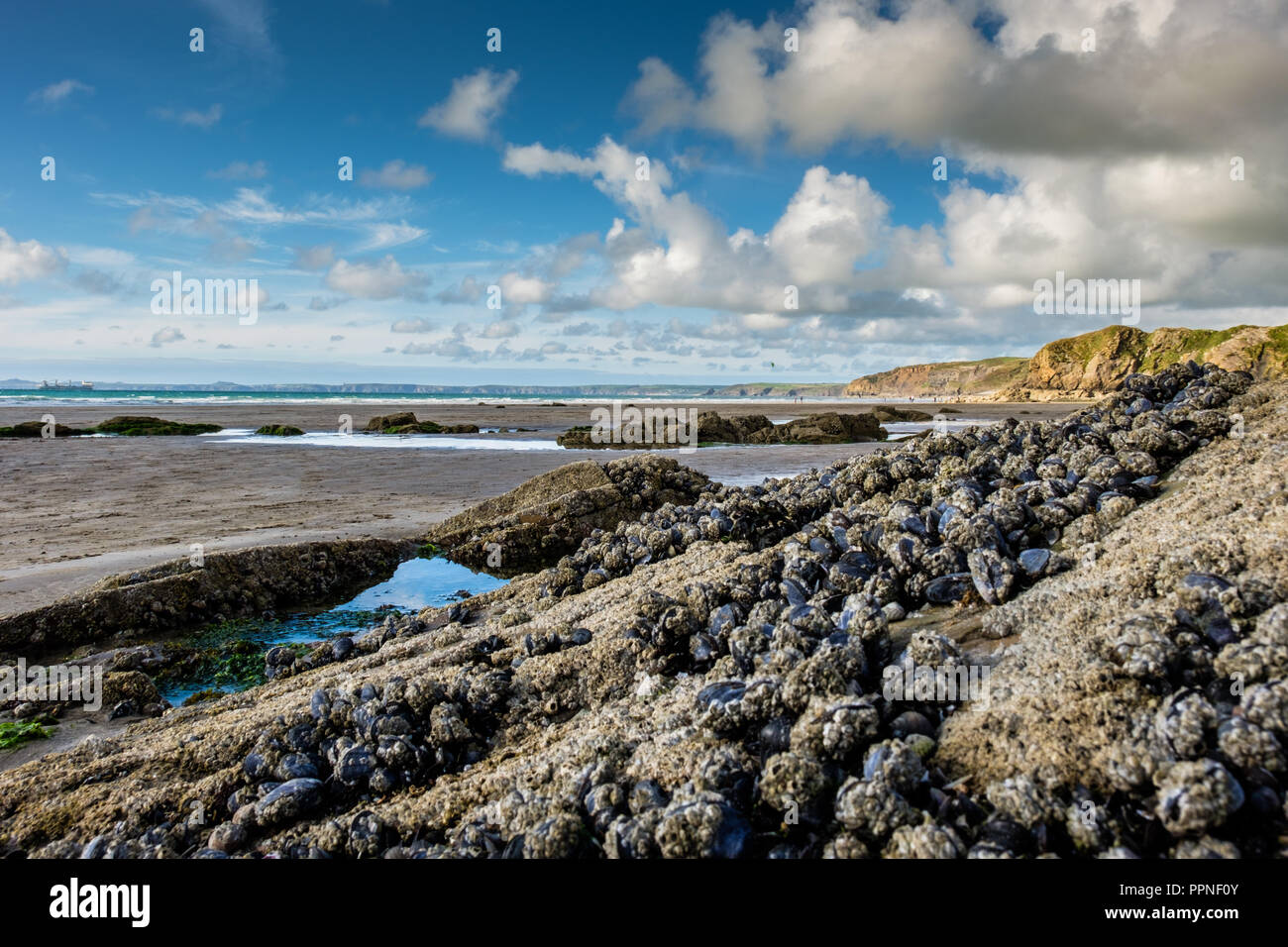 The beach at Little Haven, Pembrokeshire, Wales - Stock Image