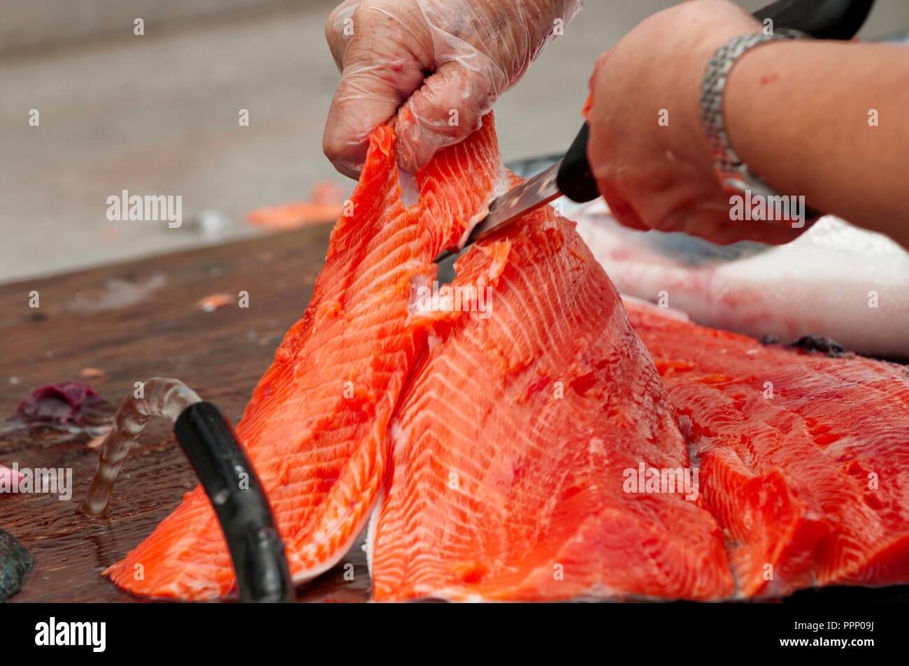First Nation member, cleans and cuts freshly catched salmon (Prince Rupert, British Columbia) - Stock Image