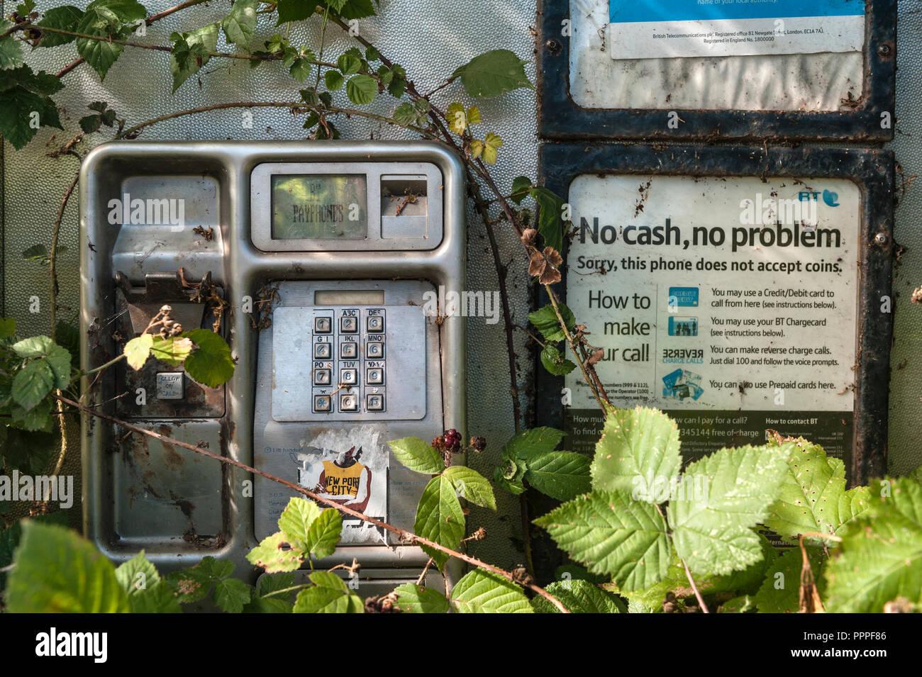 Abandoned roadside phone box overgrown with brambles, Herefordshire, UK - Stock Image