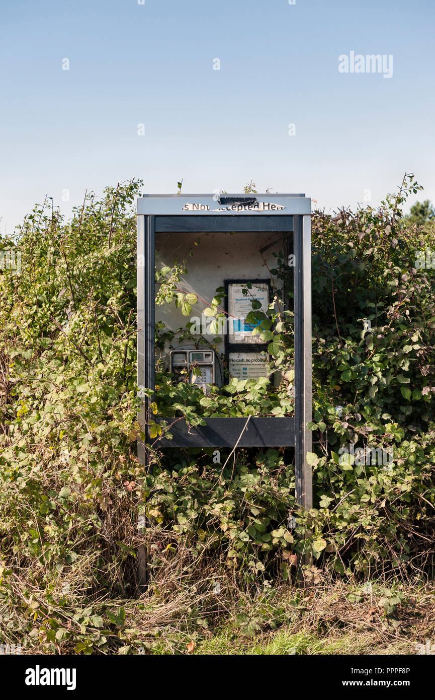 Abandoned roadside phone box overgrown with brambles, Herefordshire, UK - Stock Image