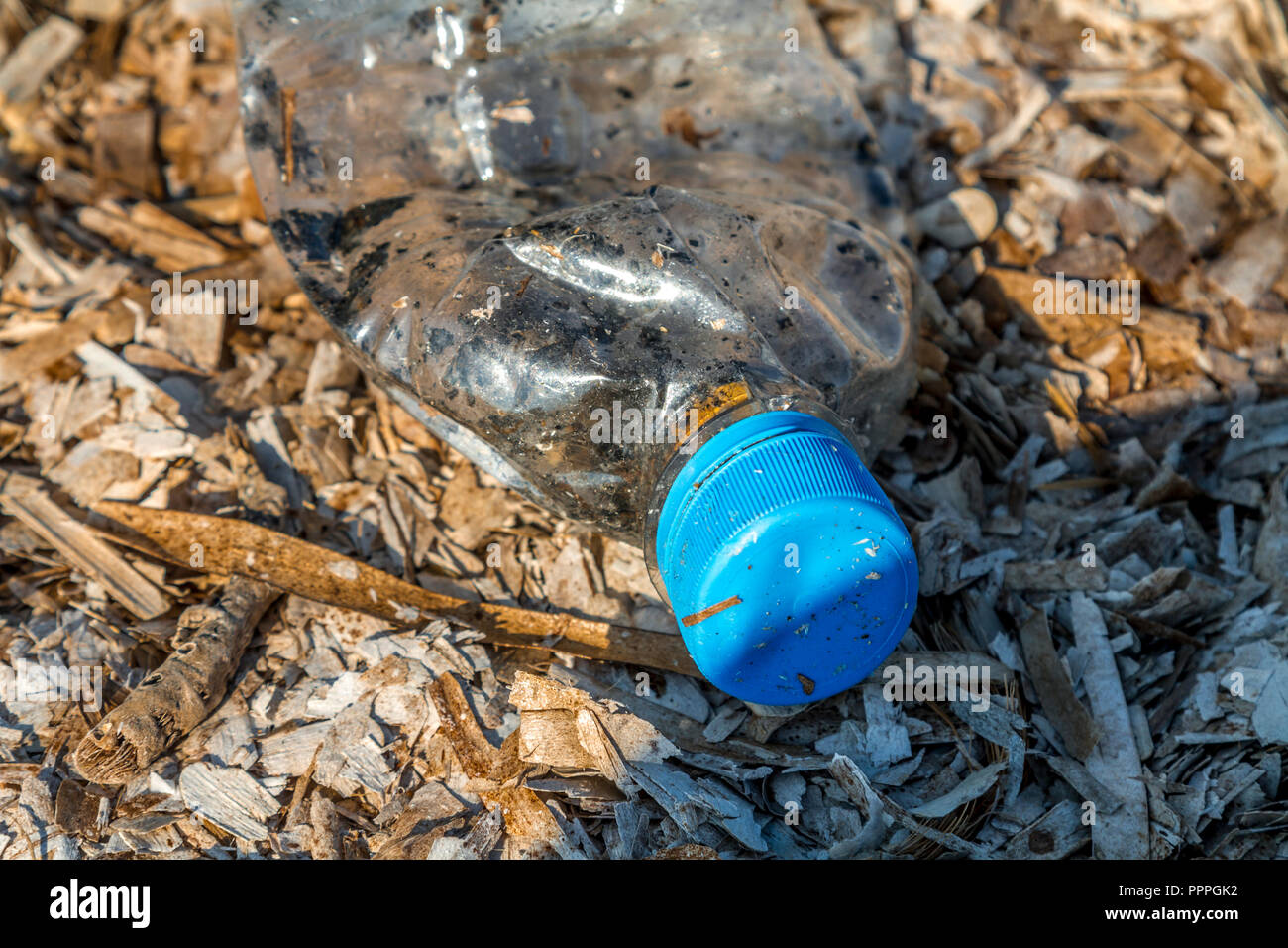 Discarded plastic pet bottle with blue top lying on a bed of dry seaweed on the shoreline causing environmental plastic pollution - Stock Image