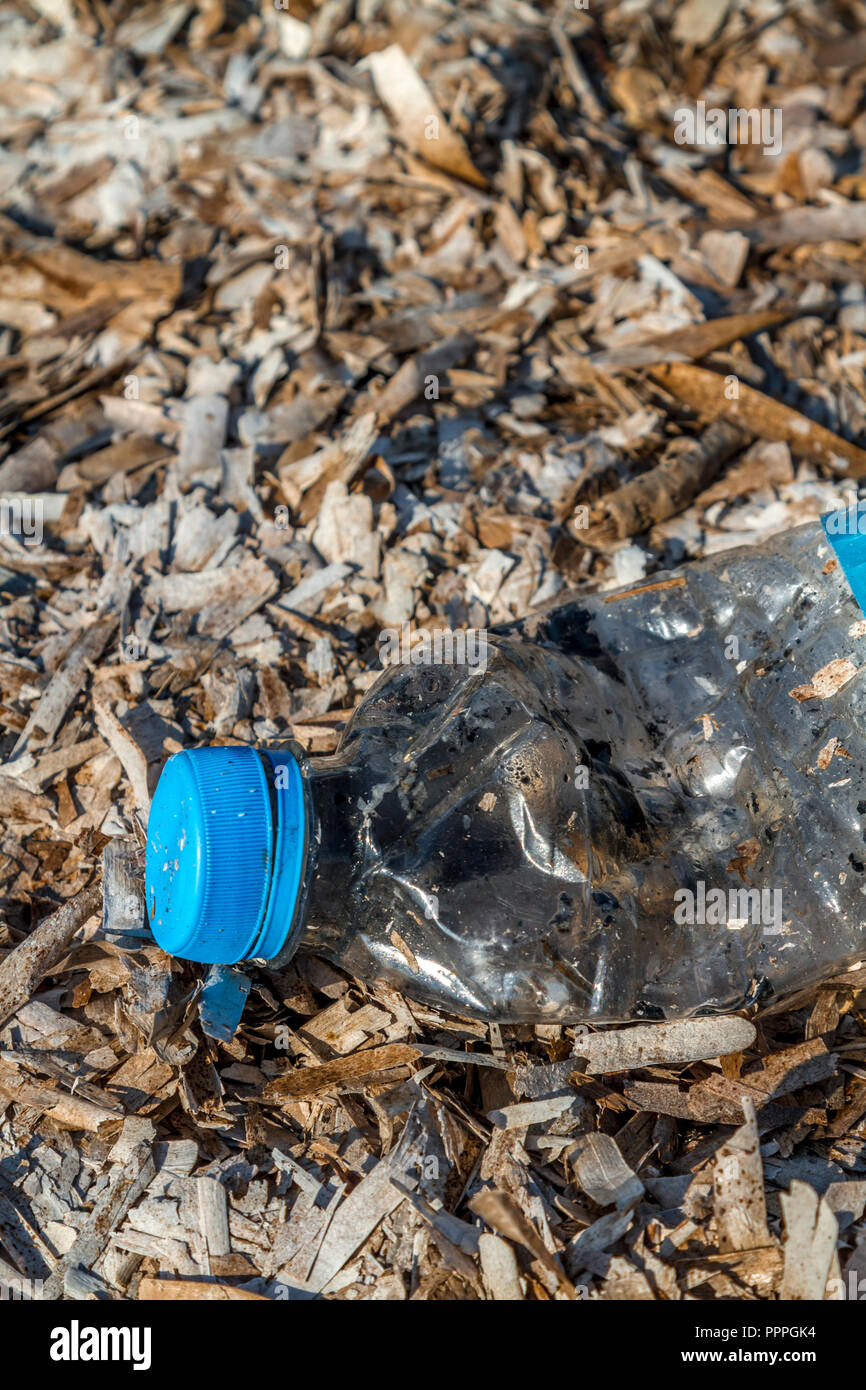 ``Discarded plastic pet bottle with blue top lying on a bed of dry seaweed on the shoreline causing environmental plastic pollution - Stock Image