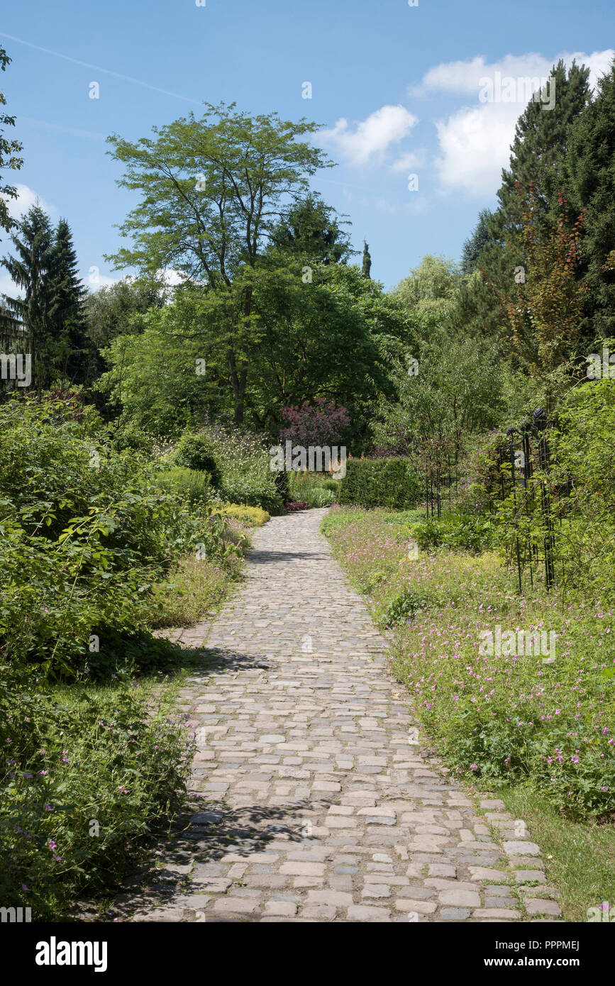 path, Rombergpark, Dortmund, Ruhr district, North Rhine-Westphalia, Germany - Stock Image