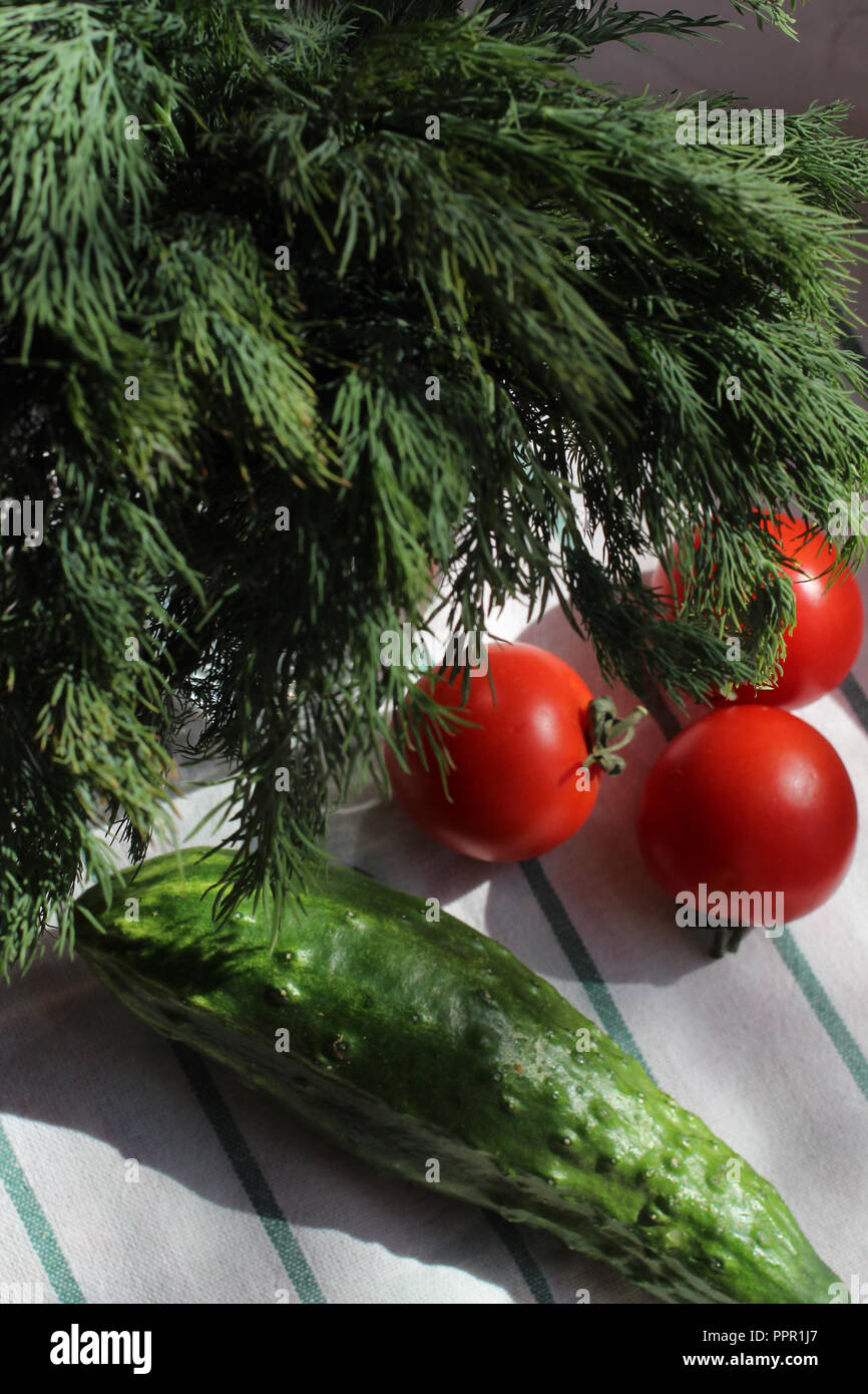 tomato fresh dill and cucumber on a kitchen towel, hard light Stock Photo