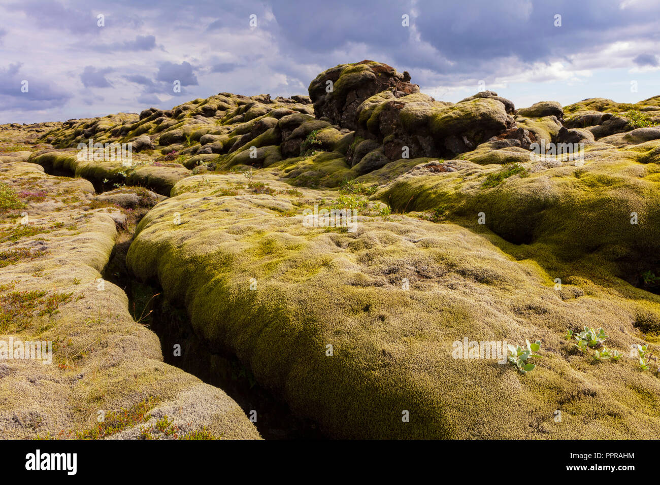 Ancient lava field near Vik, Iceland off of Ring Road. - Stock Image