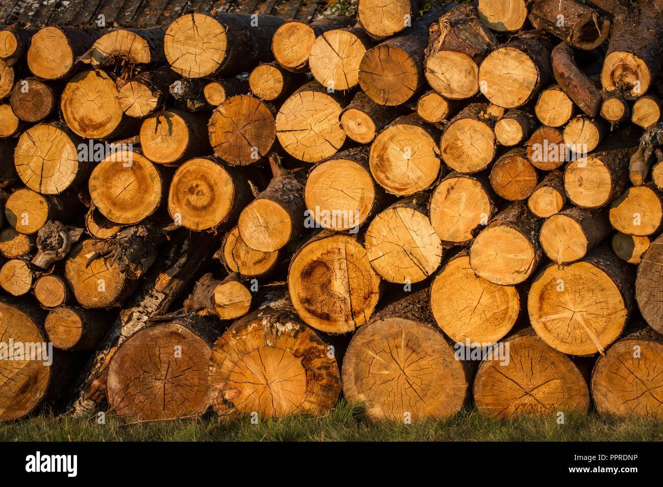 Wood stack Stock Photo