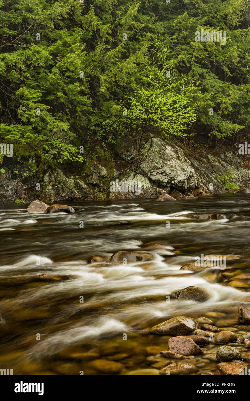Sacandaga River in spring, Adirondack Mountains, Hamilton Co., NY - Stock Image