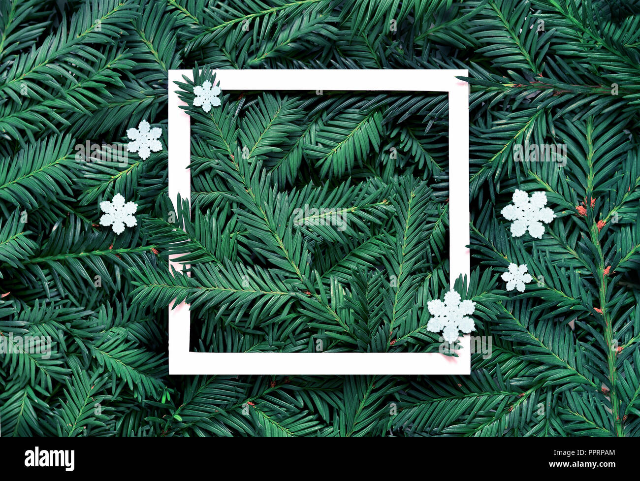 creative background of pine branch with white paper frame new year and merry christmas concept flat lay