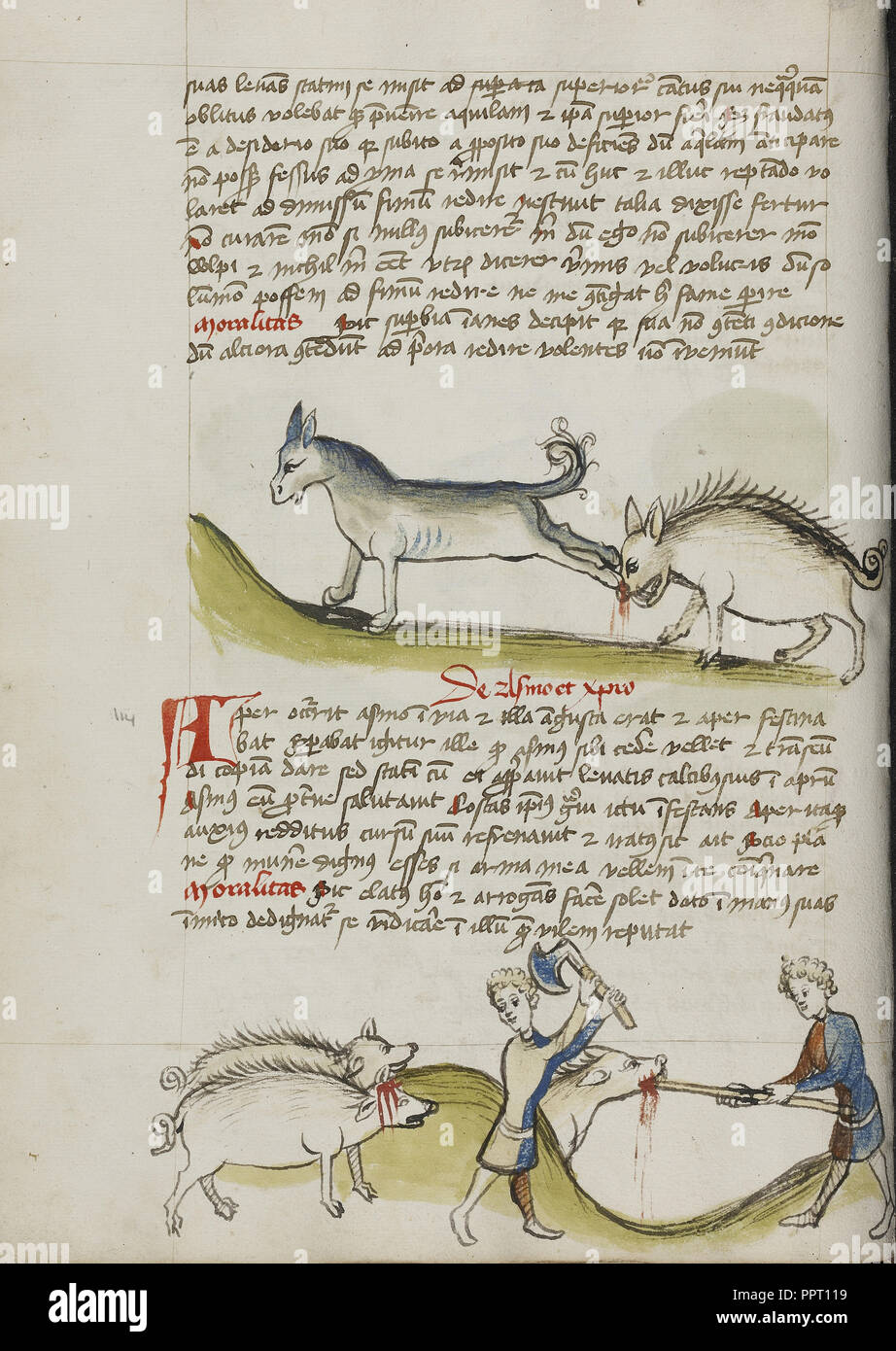 A Donkey Kicking a Wild Boar; A Pig Being Slaughtered; Trier, probably, Germany; third quarter of 15th century; Pen and black - Stock Image