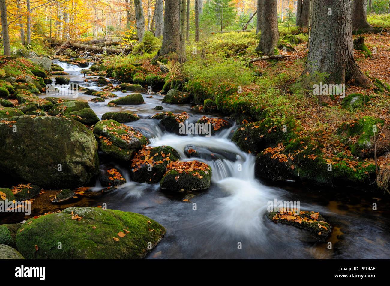 Kleine Ohe, october, Bavarian Forest National Park, Germany, Waldhäuser - Stock Image
