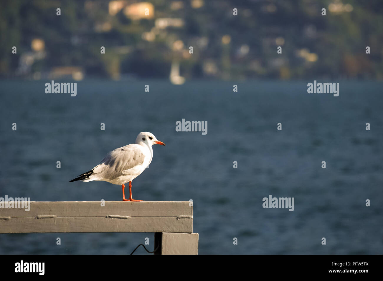 Lonely seagull is looking across the majestic Lake Lugano in the canton of Ticino in the southern part of Switzerland Stock Photo