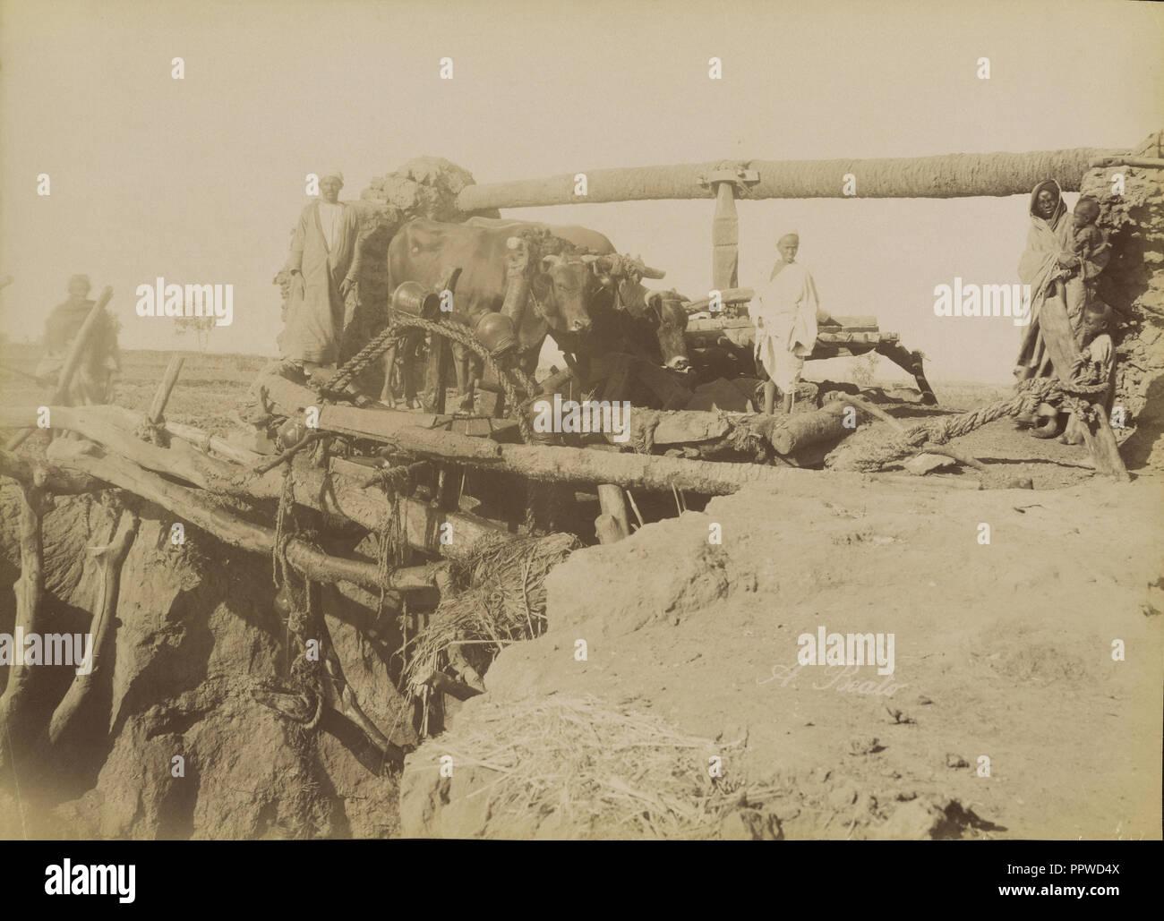 Sakkie; Antonio Beato, English, born Italy, about 1835 - 1906, 1880 - 1889; Albumen silver print - Stock Image