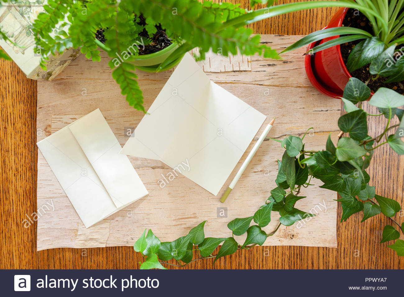 Wood and birch bark background with blank note cards bordered by potted houseplants shot from above with room for copy space. Setting in natural dayli - Stock Image