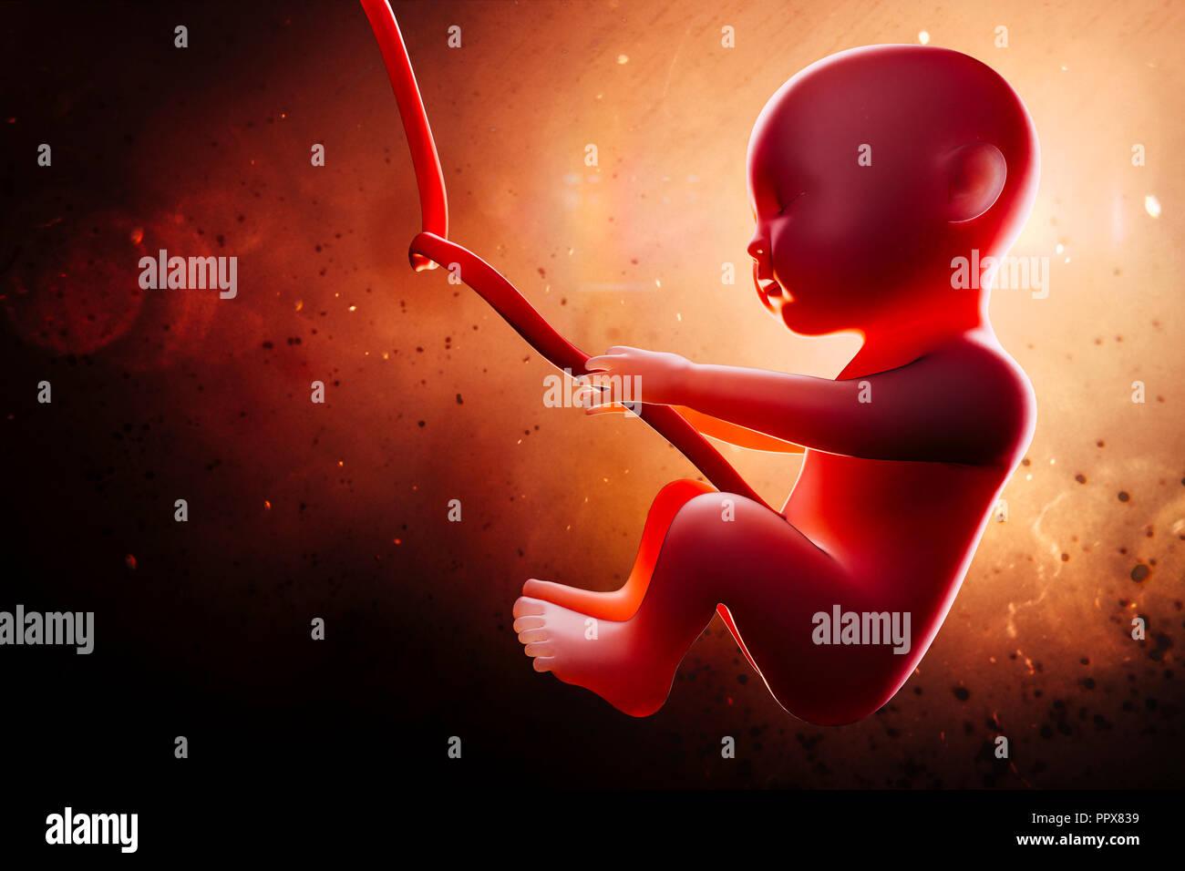 3d Human Fetus Inside The Womb Stock Photo 220623965 Alamy