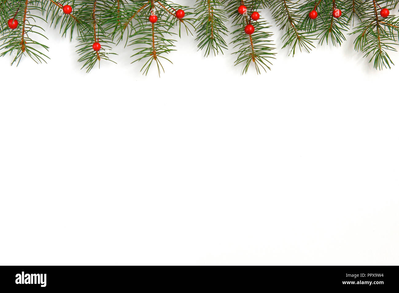 Christmas Card Background.Christmas Background With Xmas Tree And Red Berries On White