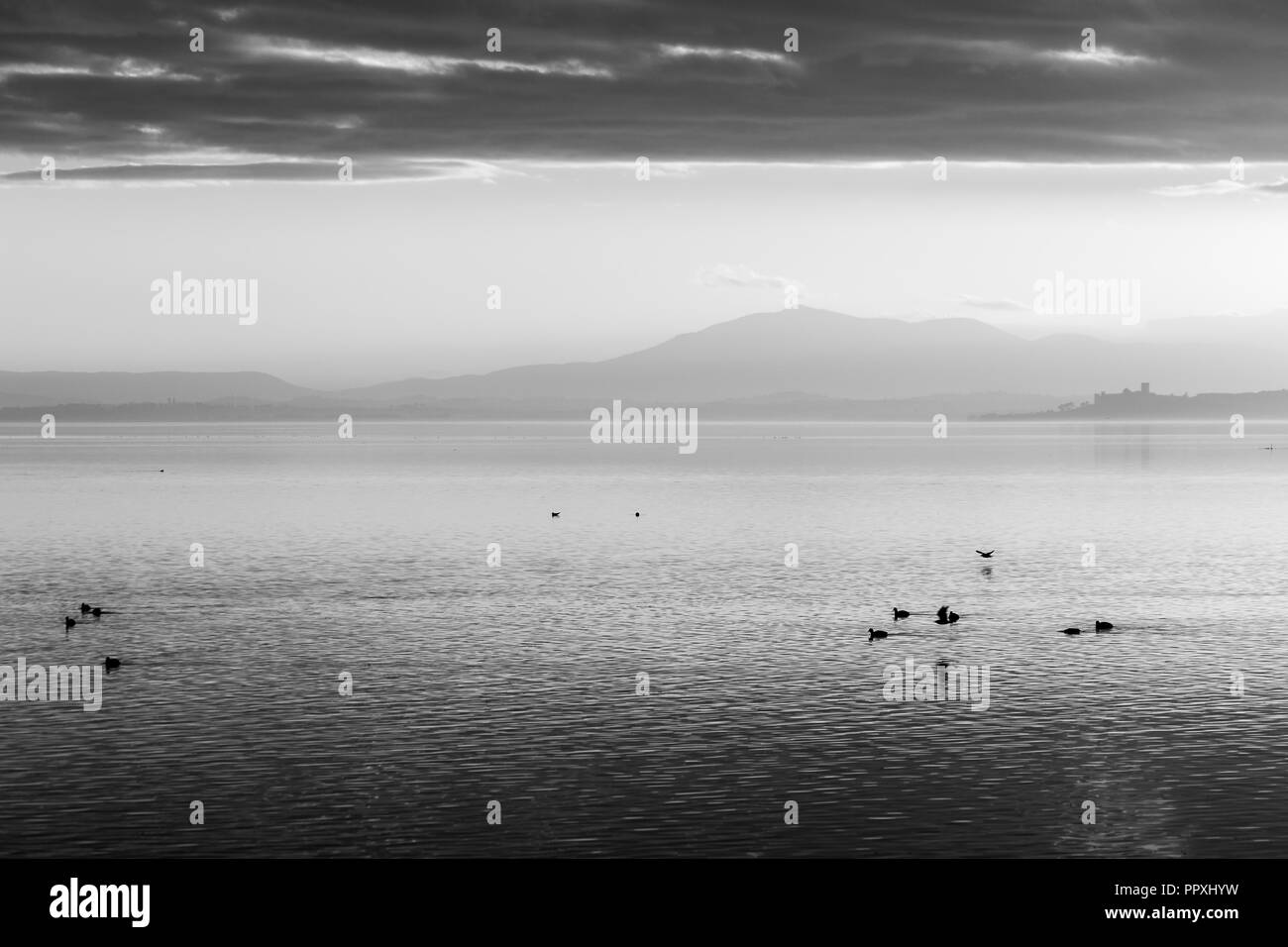 Beautiful view of Trasimeno lake at sunset with birds on water and Castiglione del Lago town in the background Stock Photo