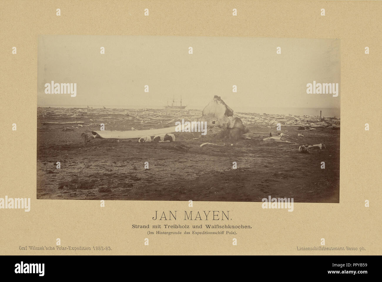 Jan Mayen, Strand mit Treibholz und Walfischknochen., Im Hintergrunde des Expeditionsschiff Pola);, Linienschiffs-Lieutenant - Stock Image