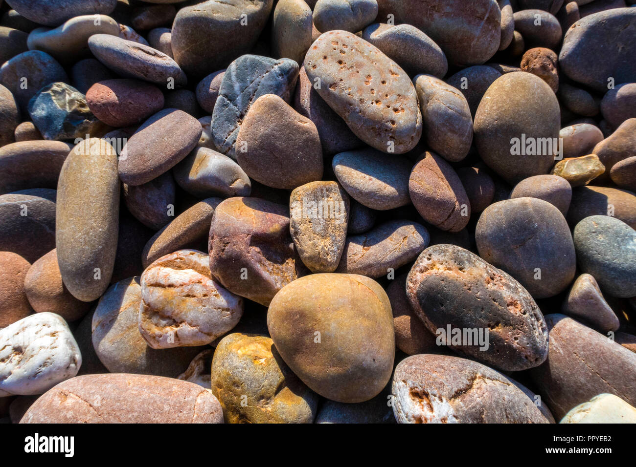 Colourful pebbles on Sidmouth beach. - Stock Image
