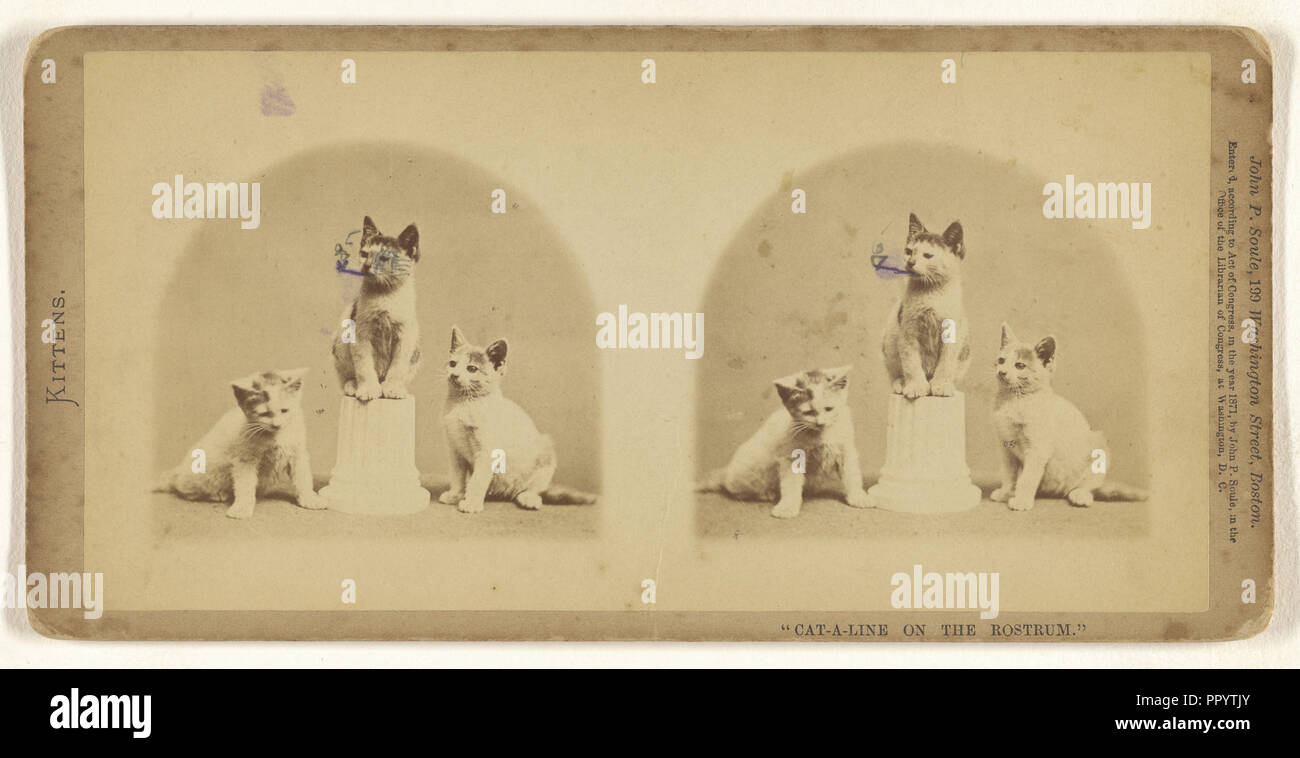 Cat-a-line on the Rostrum.; John P. Soule, American, 1827 - 1904, 1871; Albumen silver print - Stock Image