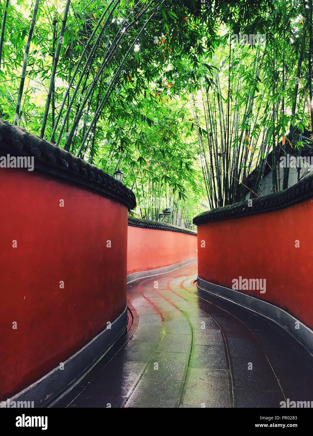 A piece of bamboo forest with red wall surrounded in Chengdu Wuhou