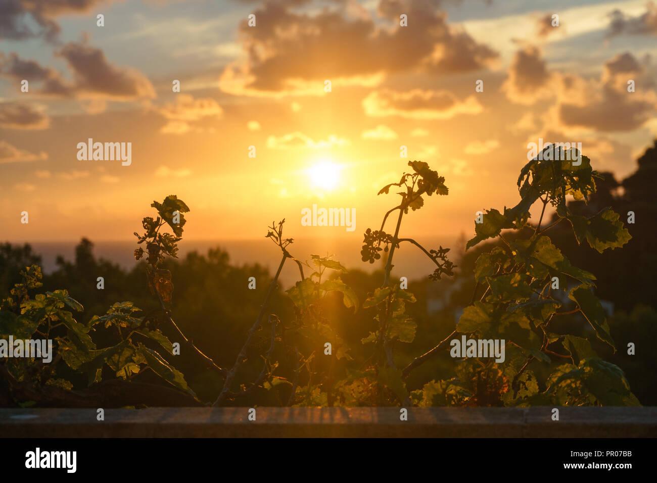 Europa Spanien Norden Mittelmeer  - Sonnenaufgang in Canyamel auf einem Balkon - Stock Image