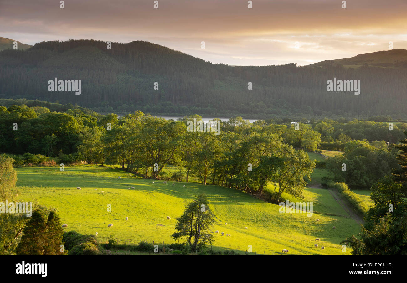 View with Bassenthwaite Lake in distance, Lake District National Park, UNESCO World Heritage Site, Cumbria, England, United Kingdom, Europe - Stock Image