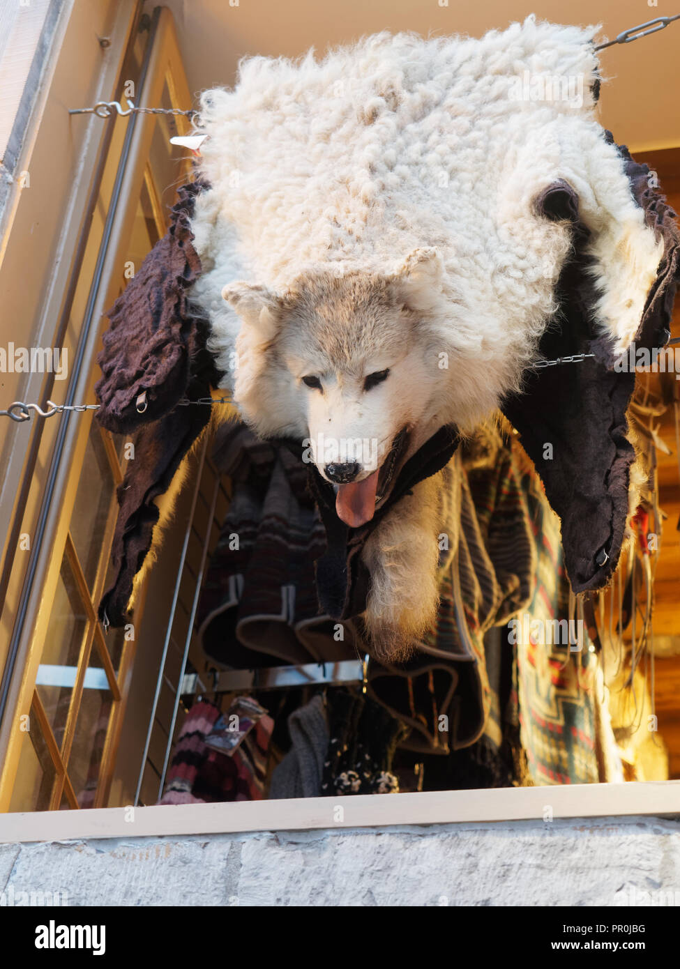 A wolf skin rug on display in the window of a boutique in old Quebec cit. Quebec,Canada - Stock Image