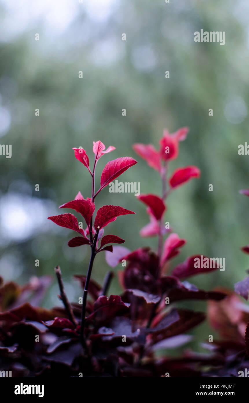 plant macro image, autumn - Stock Image