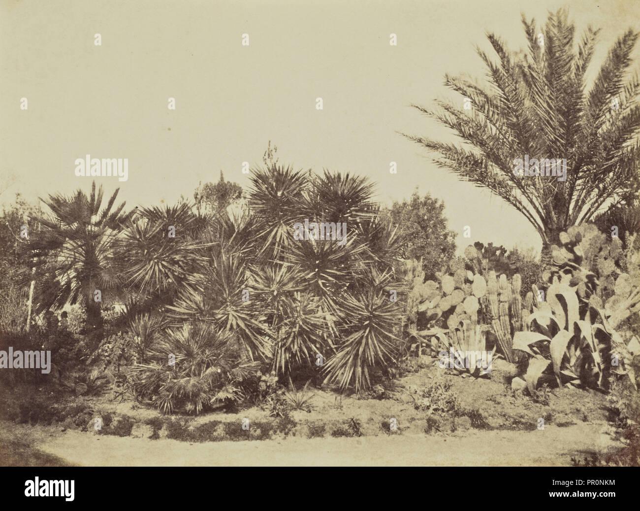 Garden on Monte Pincio, Rome; Mrs. Jane St. John, British, 1803 - 1882, Rome, Italy; 1856 - 1859; Albumen silver print - Stock Image