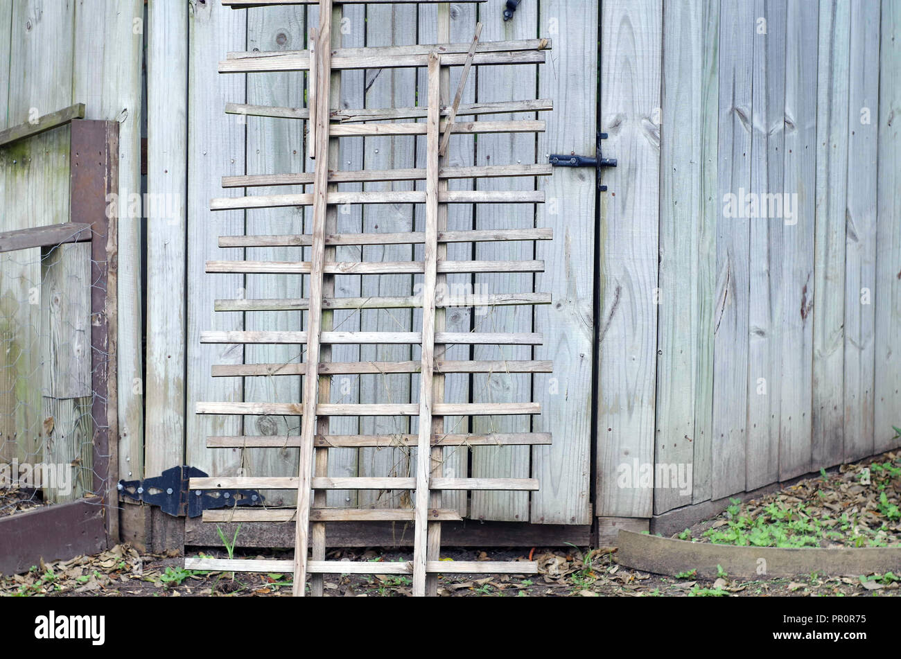 A pair of unused wooden garden trellises leaning against a cedar fence gate. - Stock Image
