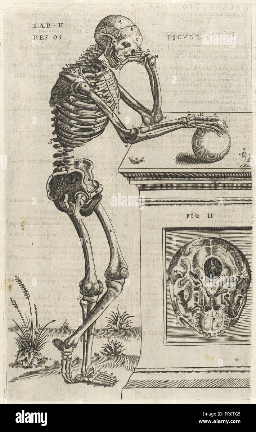 Plate 2, Tables anatomiques, avec les pourtraicts et declaration d'iceulx: ensemble un denombrement de cinq cens maladies - Stock Image
