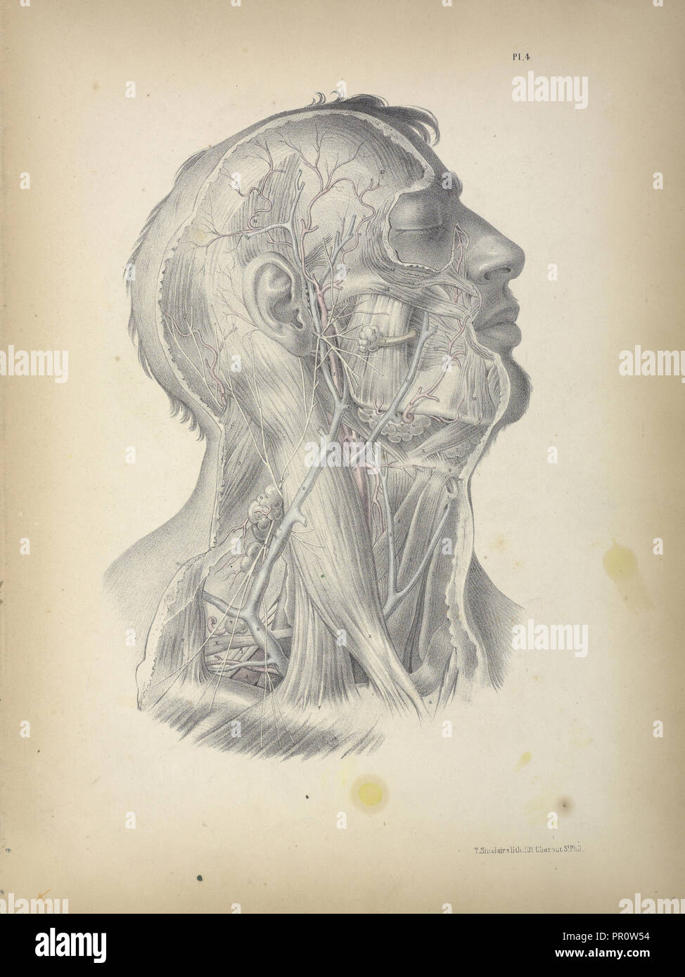 Pl. 4, Surgical anatomy, Maclise, Joseph, Lithography, 1851, Colored lithograph. Maclise is the author and illustrator - Stock Image