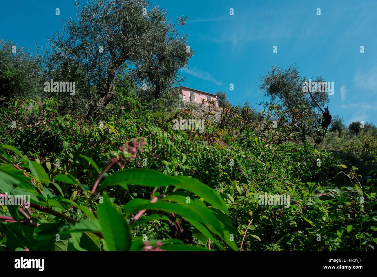 Wanderung zum Kloster San Fruttuoso, Portofino Stock Photo