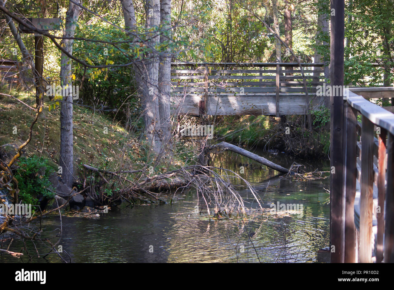 A bridge overpasses serene waters in a wooded setting. - Stock Image