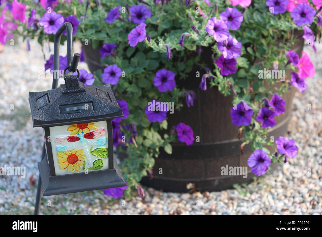 Million bells flowers in a barrel with a garden lantern - Stock Image