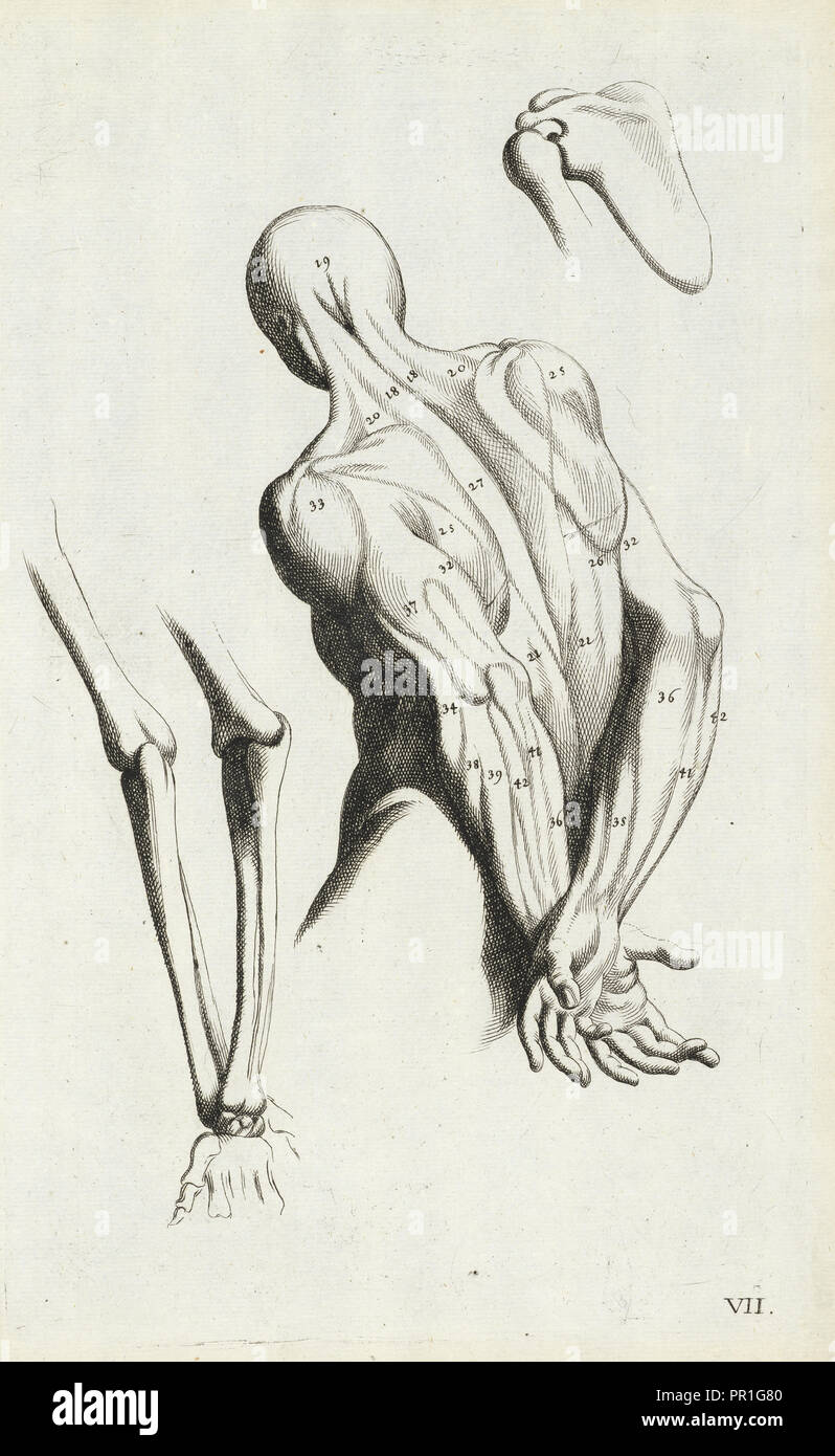Anatomical diagram showing back and arm muscles, L'anatomia dei pittori del signore Carlo Cesio, das ist, Deutliche Anweisung - Stock Image