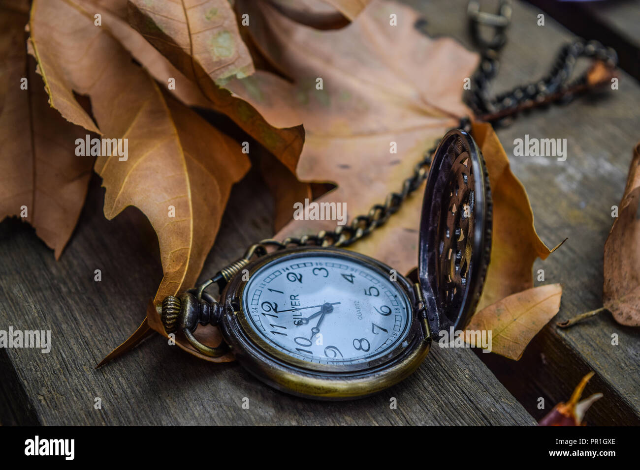 Pocket watch on autumn leaves - Stock Image