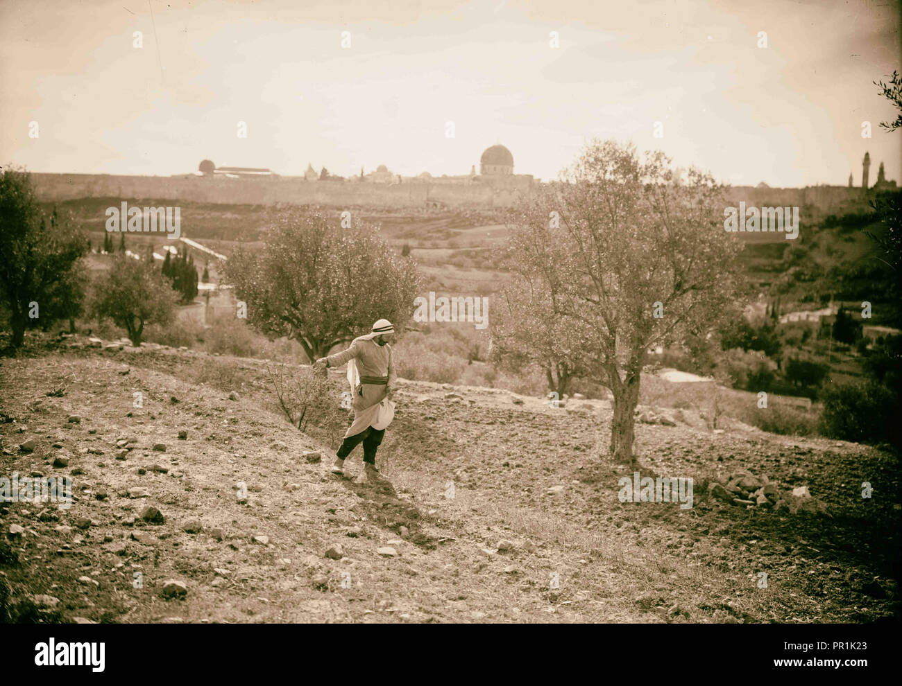 Agriculture, Sowing grain. 'Behold, a sower went forth to sow' 1920, Middle East - Stock Image