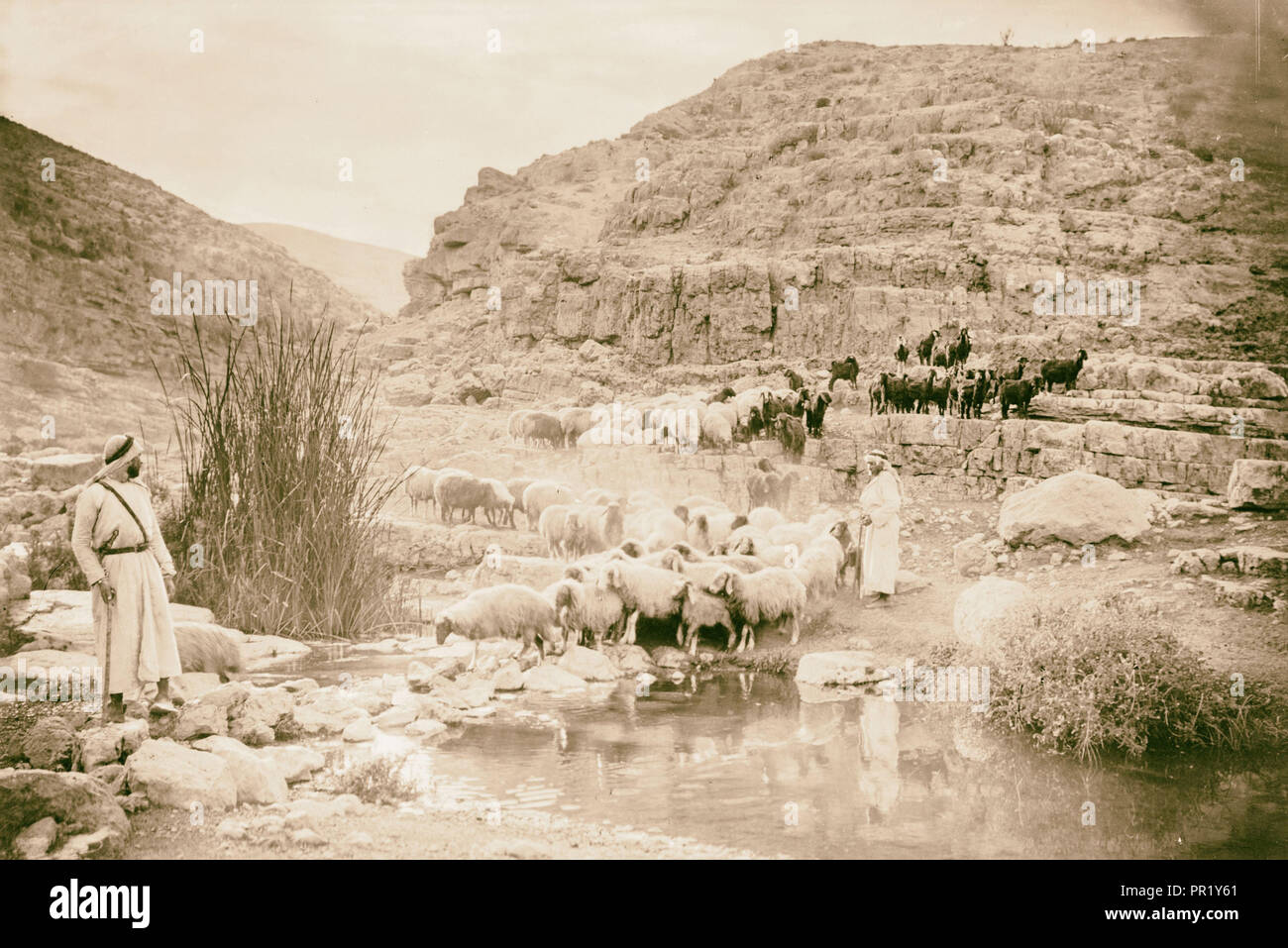 shepherd life illustrating the Twenty-Third Psalm 'He leadeth me in paths of Righteousness'. 1910 - Stock Image