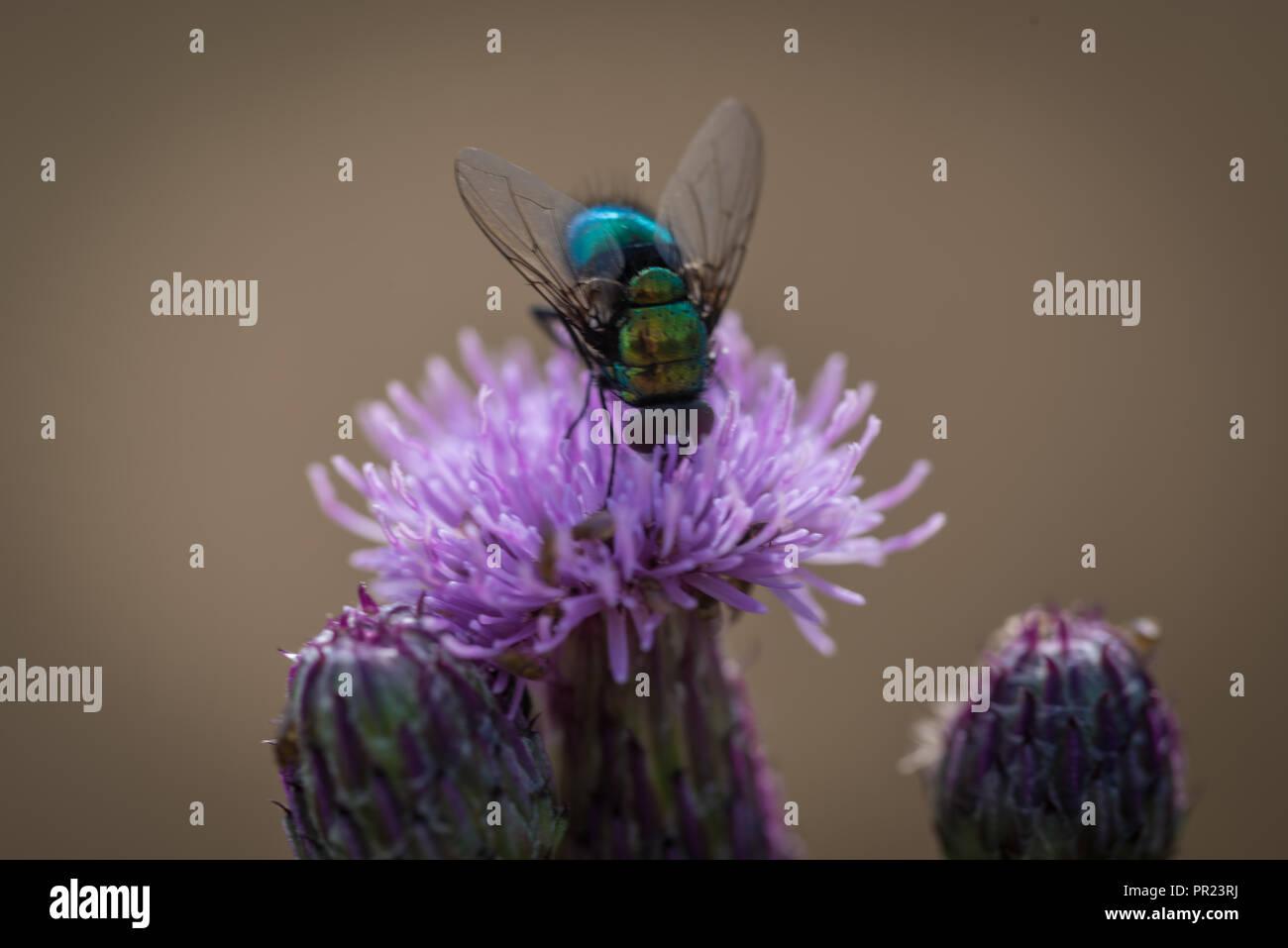 Fliege Stock Photo
