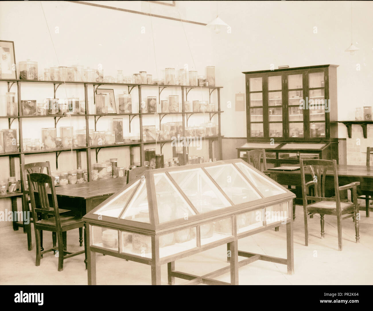 Iraq. (Mesopotamia). Royal College of Medicine of Iraq. Baghdad. Medical College. The Pathological Museum. 1932, Iraq, Baghdad - Stock Image