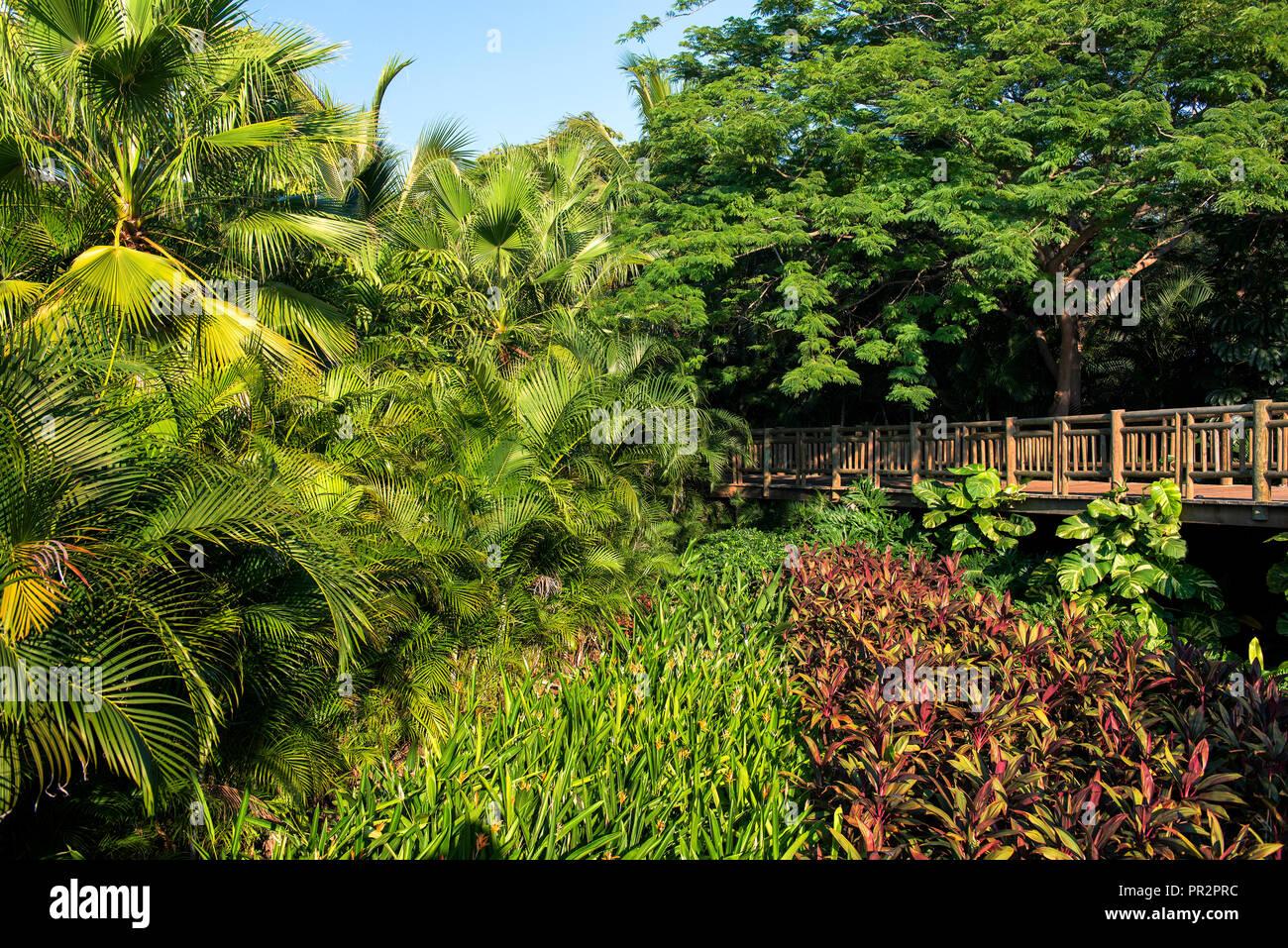 Path through Jungles - Stock Image