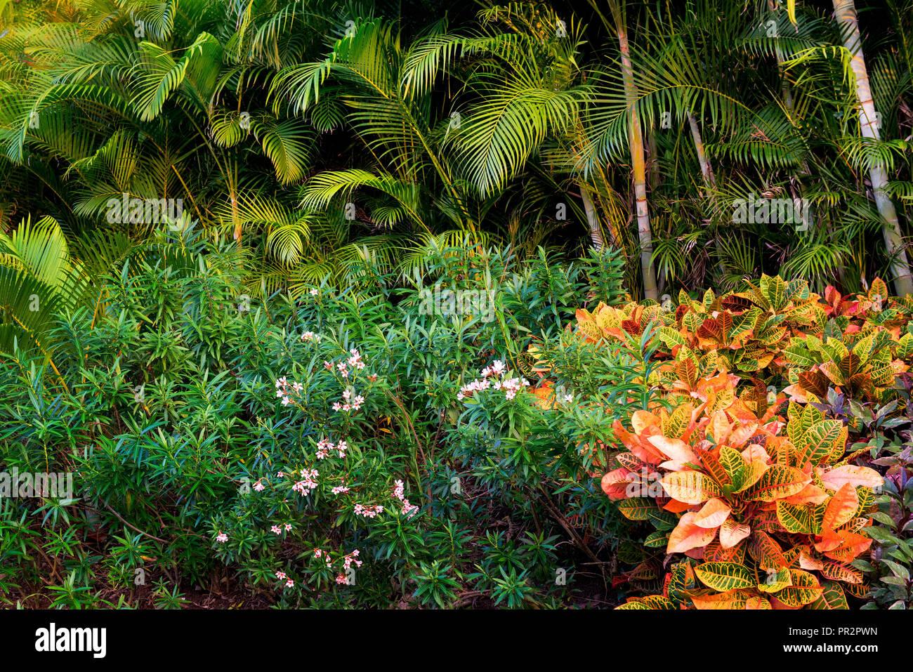 Tropical Garden - Stock Image