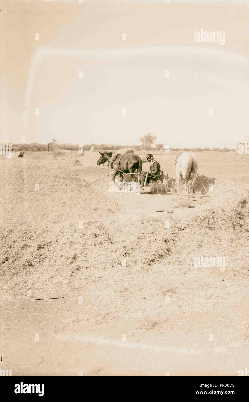 agriculture 1898, Middle East, Israel and/or Palestine - Stock Image