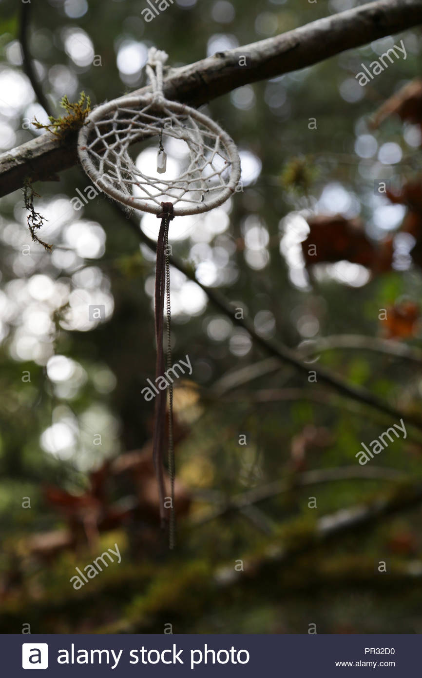 Dreamcatcher hanging in the woods in the Pacific Northwest. - Stock Image