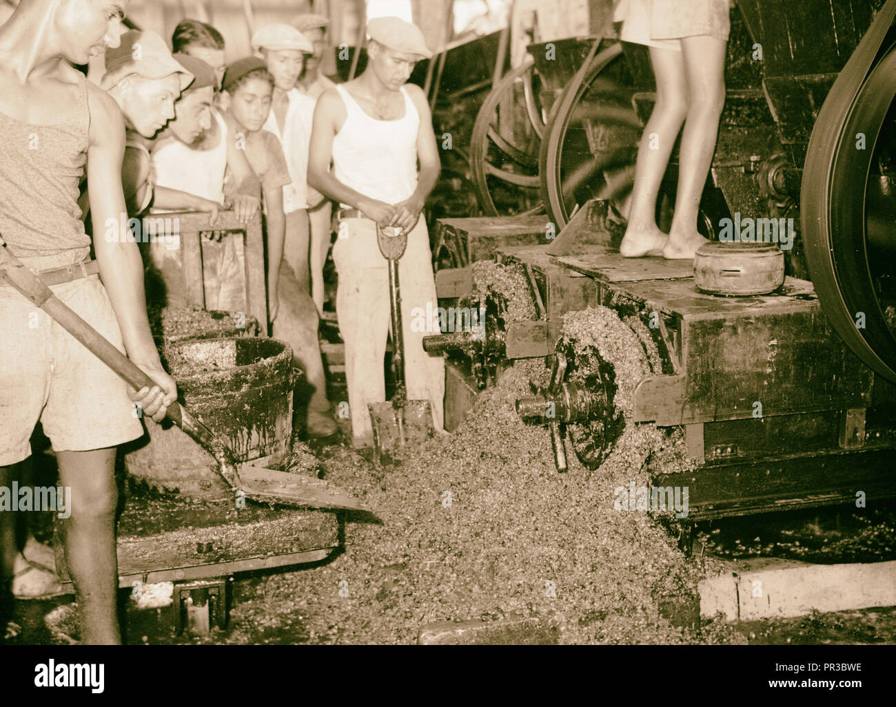 Vintage activities at Richon-le-Zion, Aug. 1939. Close up of stems & seeds, etc. thrown out from crusher by centrifugal force - Stock Image