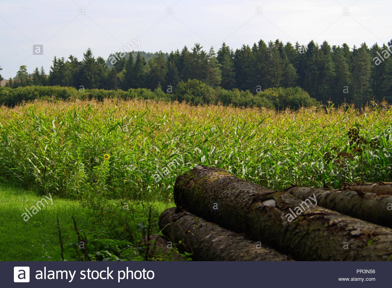 autumnal country and meadow landscape - Stock Image